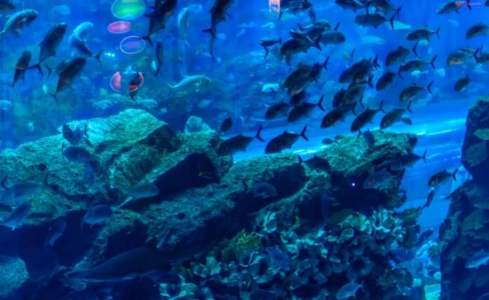 dubaï, incontournables de dubaï, à voir à dubaï, à faire à dubaï, activitès dubaï, séjour dubaï, monuments dubaï, dubai mall, aquarium dubai