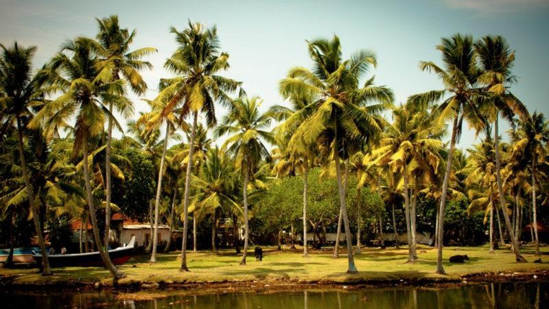 les meilleures destinations pour le mois de décembre, où partir, où partir en décembre, partir au kerala