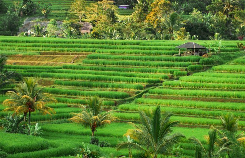 séjour bali incontournables rizières